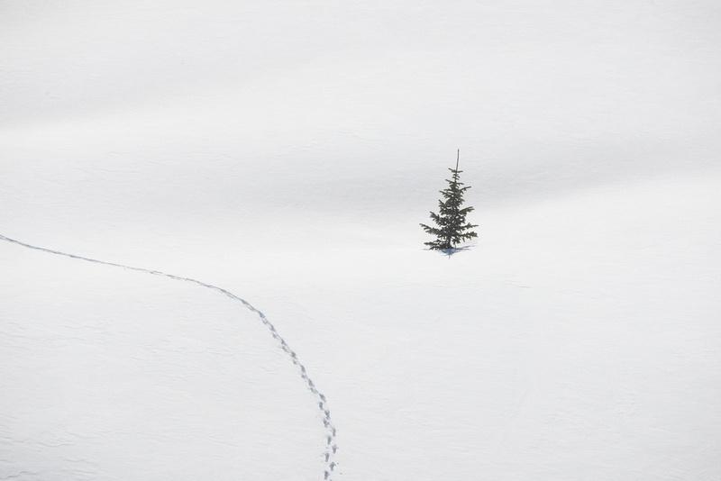 The Solitary Traveler