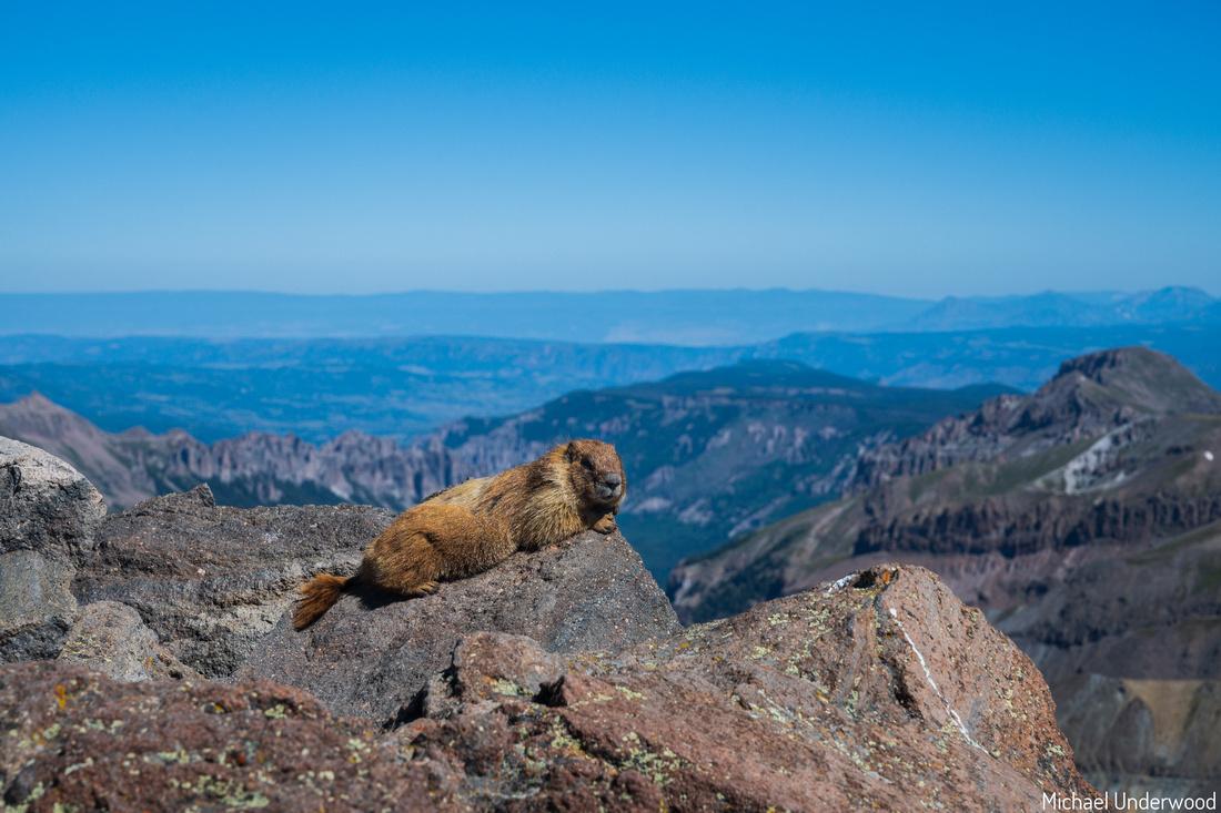 Marmot Uncompahgre