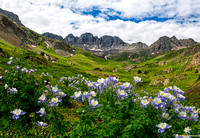 Columbines in American Basin
