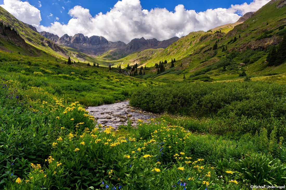 Wildflowers in American Basin