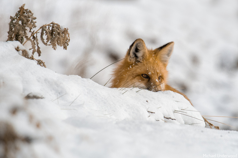 On the Lookout